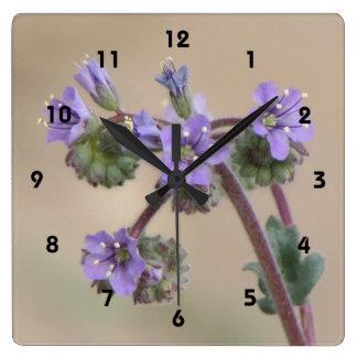 Wildflowers de la púrpura de Phacelia Reloj Cuadrado