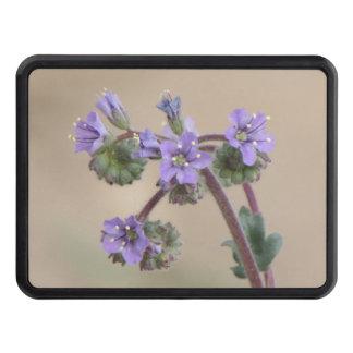 Wildflowers de la púrpura de Phacelia Tapas De Tráiler