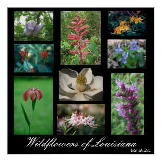 Wildflowers de Luisiana Poster