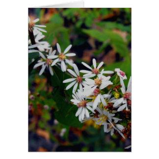 Wildflowers de Michigan Tarjeta De Felicitación
