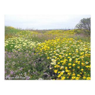 Wildflowers de Playa del Rey - Mike Izzo Tarjeta Postal