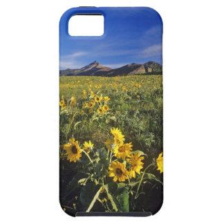 Wildflowers del balsomroot de Arrowleaf en Funda Para iPhone 5 Tough