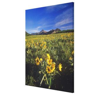Wildflowers del balsomroot de Arrowleaf en Waterto Impresión En Lona Estirada