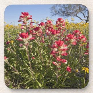 Wildflowers del borde de la carretera en Tejas, pr Posavaso