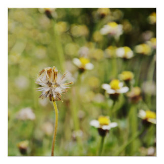 wildflowers del borde de la carretera posters