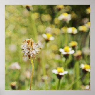wildflowers del borde de la carretera póster