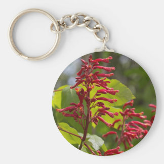 Wildflowers del castaño de Indias rojo - Aesculus  Llaveros