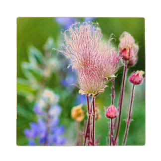 Wildflowers del humo de pradera en la arboleda 2 posavasos de madera