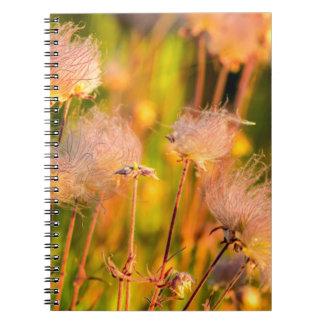Wildflowers del humo de pradera en la arboleda de libros de apuntes
