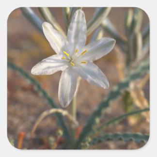 Wildflowers del lirio del desierto pegatina cuadrada