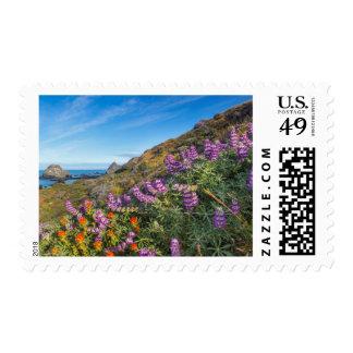 Wildflowers del Lupine y de la brocha Sello Postal