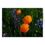 Wildflowers en el condado de Sonoma Tarjeta De Felicitación