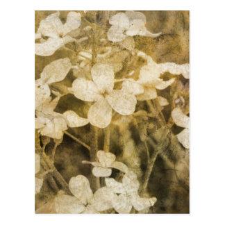 Wildflowers en sepia postal
