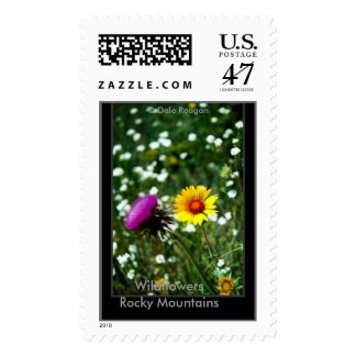 Wildflowers - Estes Park, Co, USA. Postage