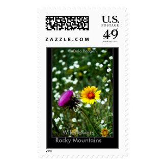 Wildflowers - Estes Park, Co, USA. Postage Stamp