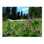 Wildflowers & Firs Postcard