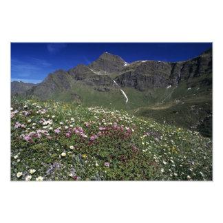 Wildflowers, floreciendo, montañas, Suiza Fotografía