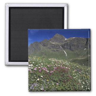 Wildflowers, floreciendo, montañas, Suiza Imán Cuadrado