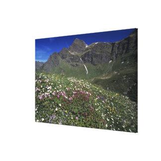 Wildflowers, floreciendo, montañas, Suiza Impresion En Lona