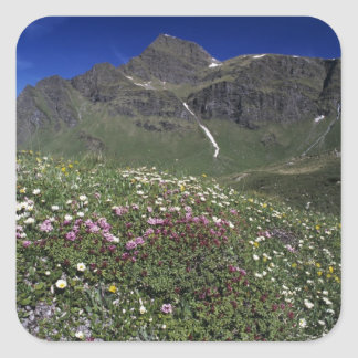 Wildflowers, floreciendo, montañas, Suiza Pegatina Cuadrada