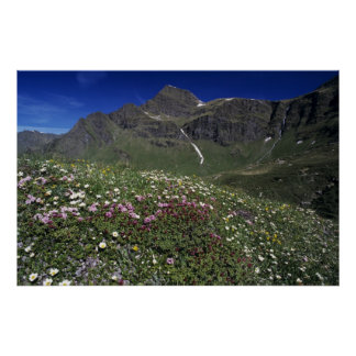 Wildflowers, floreciendo, montañas, Suiza Póster