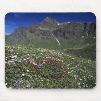 Wildflowers, floreciendo, montañas, Suiza Tapete De Ratón