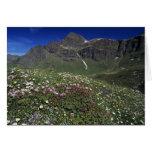 Wildflowers, floreciendo, montañas, Suiza Tarjeta De Felicitación