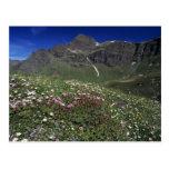 Wildflowers, floreciendo, montañas, Suiza Tarjeta Postal
