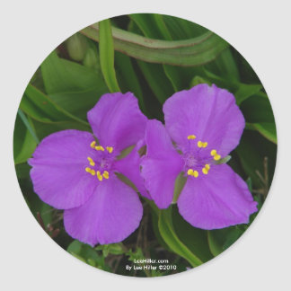 Wildflowers Fuchsia Spiderwort Hot Springs Gifts Classic Round Sticker