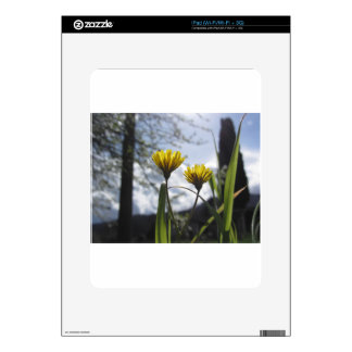 Wildflowers illuminated by the sunlight decal for iPad