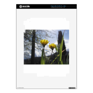 Wildflowers illuminated by the sunlight skins for iPad 2