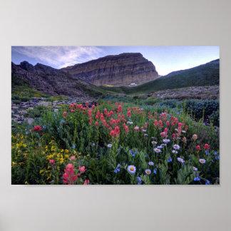 Wildflowers in High Mountain Meadow - Utah Poster