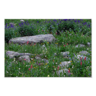 Wildflowers in the Rocky Mountains Posters
