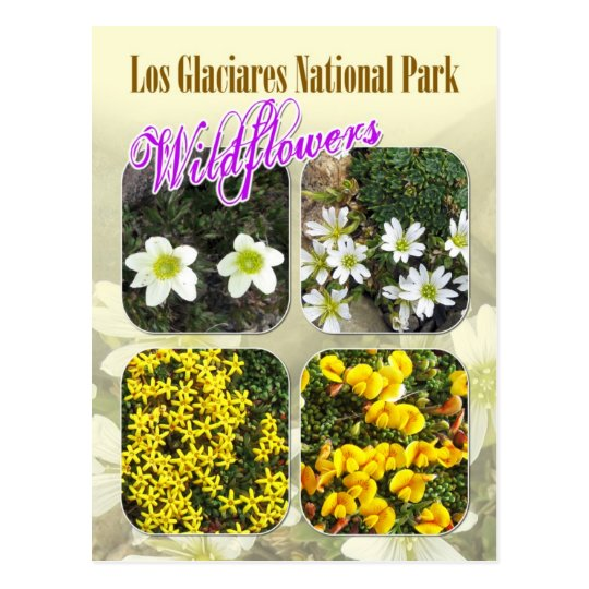 Wildflowers, Los Glaciares National Park Postcard