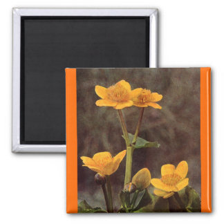 Wildflowers: Marsh Marigold Magnet