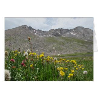 Wildflowers - Mt. Evans Card