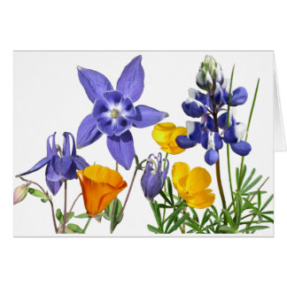 Wildflowers note card