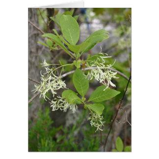 Wildflowers Notecard #6, árbol del VA de franja Tarjeta De Felicitación