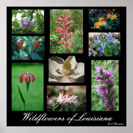 Wildflowers of Louisiana Poster