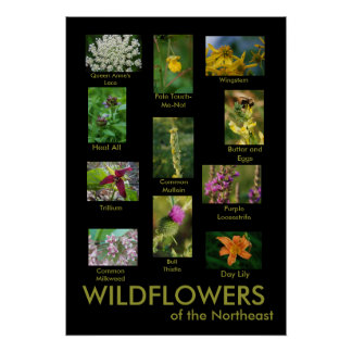 Wildflowers of the Northeast Poster