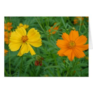 Wildflowers on Invitation/Greeting card