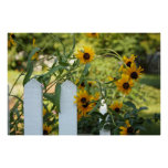 Wildflowers on the picket fence posters