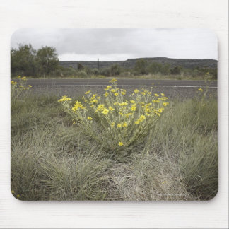 Wildflowers on the Side of the Road, Highway 90, Mouse Pad