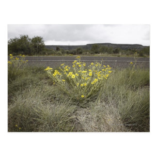 Wildflowers on the Side of the Road, Highway 90, Postcard