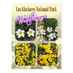 Wildflowers, parque nacional del Los Glaciares Tarjetas Postales