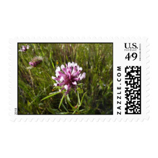 Wildflowers Postage