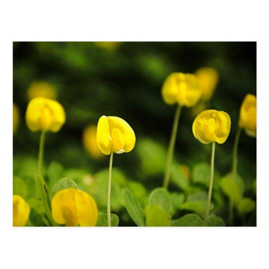 wildflowers postcards