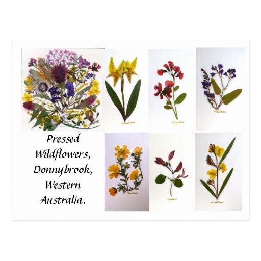 Wildflowers presionados de Donnybrook, postal