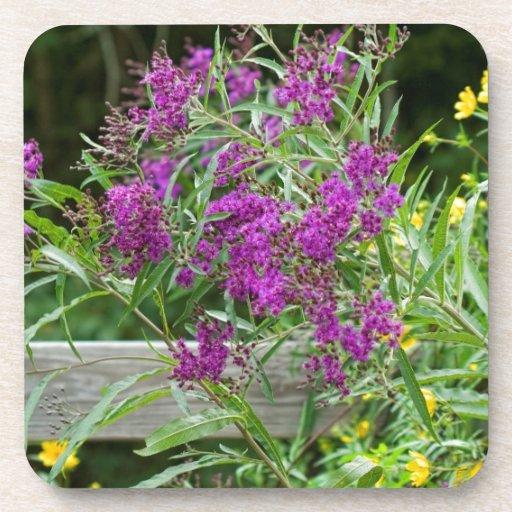 Wildflowers púrpuras del Ironweed - gigantea de Ve Posavasos