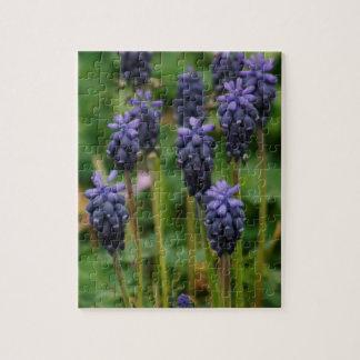 Wildflowers púrpuras del jacinto de uva puzzle con fotos